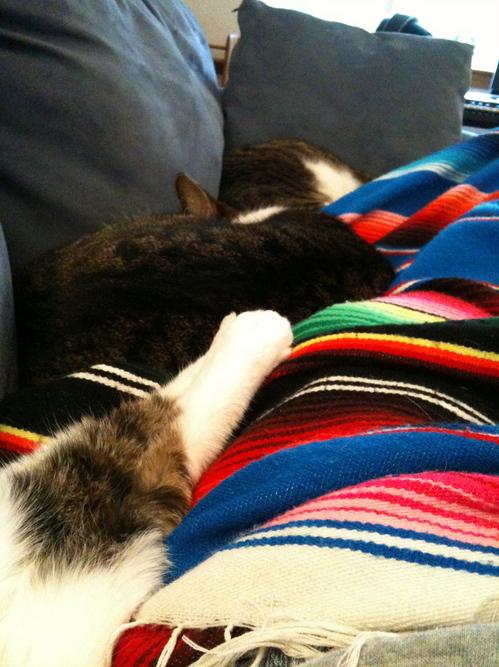kitten_pile.jpg