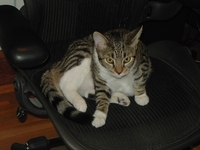 Billy-Catzilla-Chair-2004-09.jpg