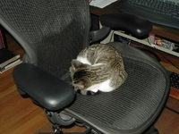 Billy-Chair-2004-08.jpg