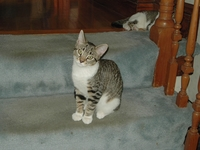 2004-07-Billy-Stairs.jpg