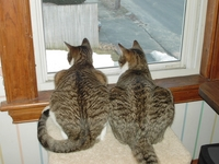 2005-02-WindowCats.jpg