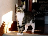 2005-04-Billy-Attention.jpg