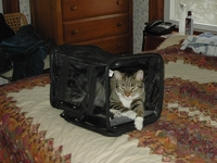 2005-04-Billy-Carrier.JPG