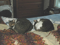 sleepyfriends-2004-12-12.jpg