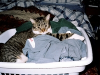 Billy in laundry basket