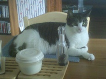 Whitey on Dining Room Table ... again