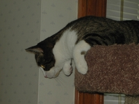 Whitey-Tower-Pounce-2005.jpg