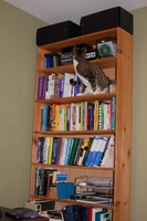 Billy up on bookshelf