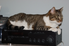 2007-Billy-Kitty-Warmer.jpg