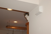 2007-Whitey-Spider-Kitchen-Cat.jpg