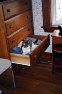 Whitey-Drawer-2004-07.jpg